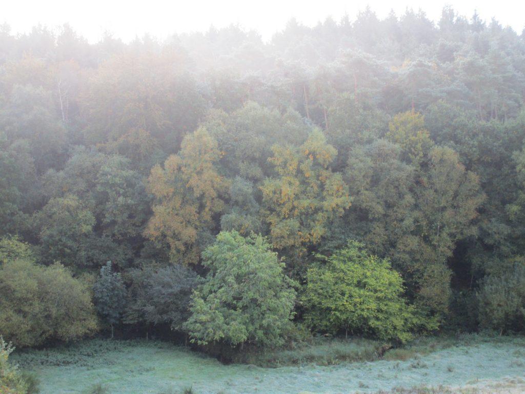 Le champ vu d'en haut (automne 2017)
