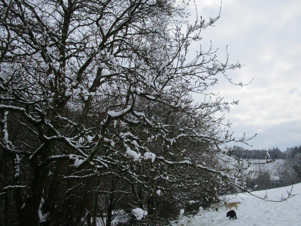 Les arbres sous la neige (hiver 2017/18)
