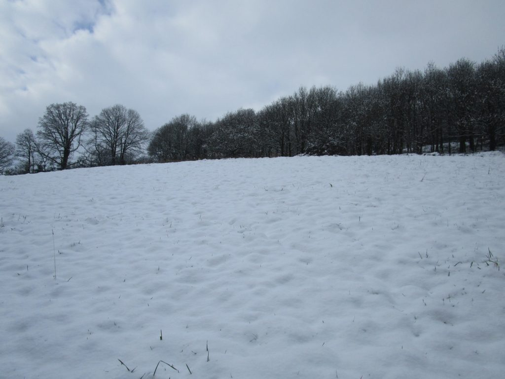 Le champ sous la neige (hiver 2017/18)
