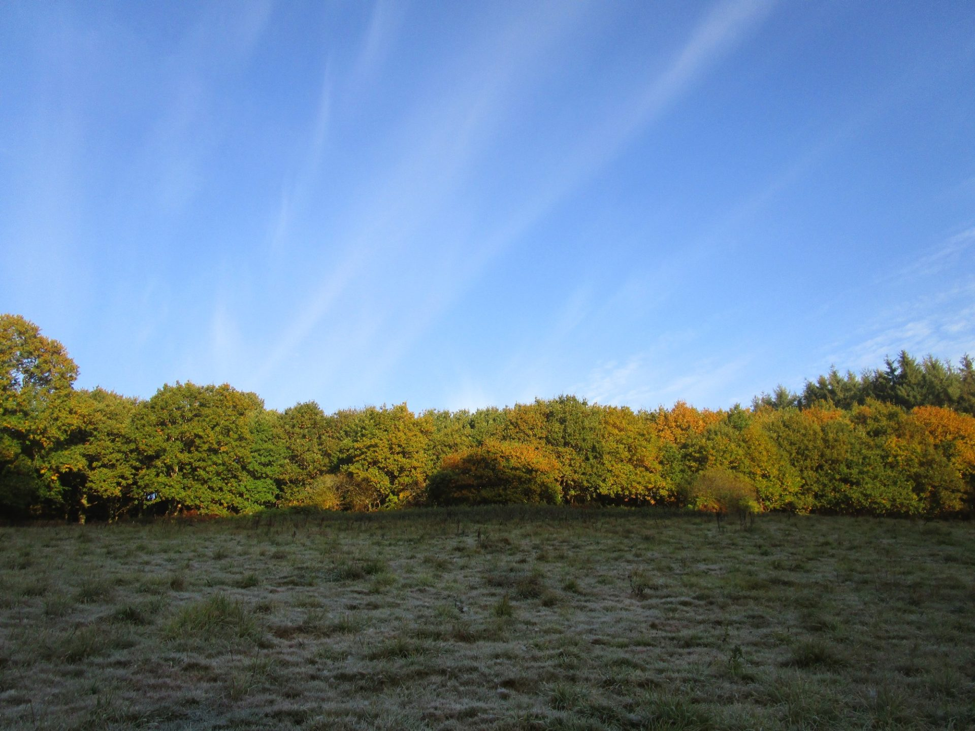 Le champ vu d'en bas (automne 2017)