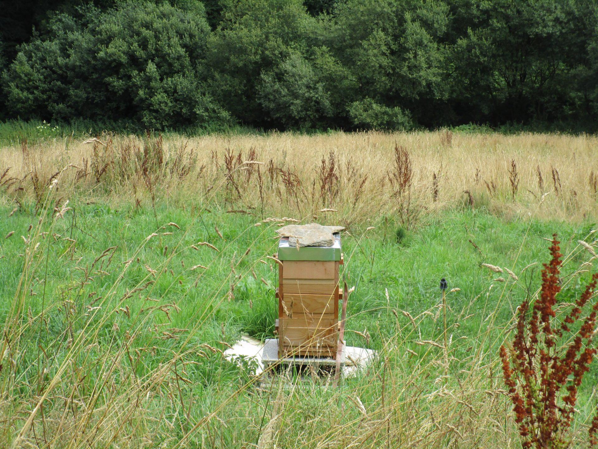 La ruche Warrée
