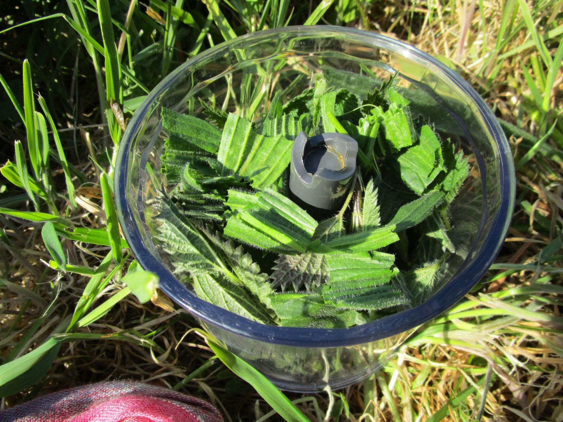 qelques feuilles de plantain
