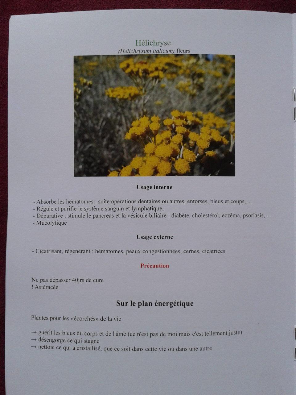 Exemple de fiche plante